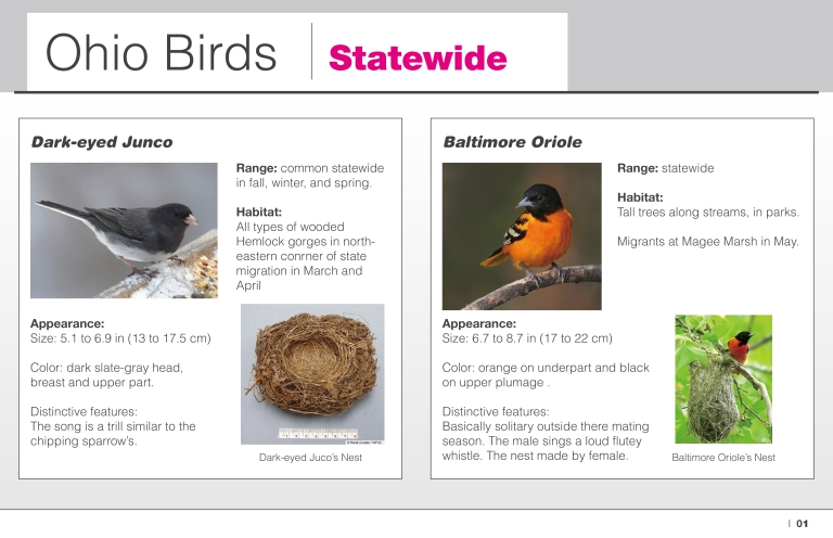 state-wide-ohio-birds-01